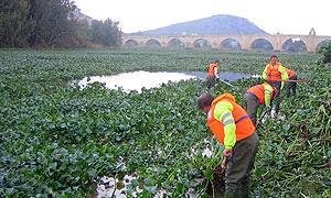 Camalote, fuente:http://www.hoy.es/20111216/local/destinan-euros-lucha-contra-201112161747.html